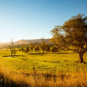 Australians Pave Way for Mancave Trend